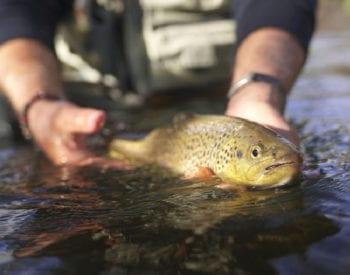 Best fly fishing in North Carolina