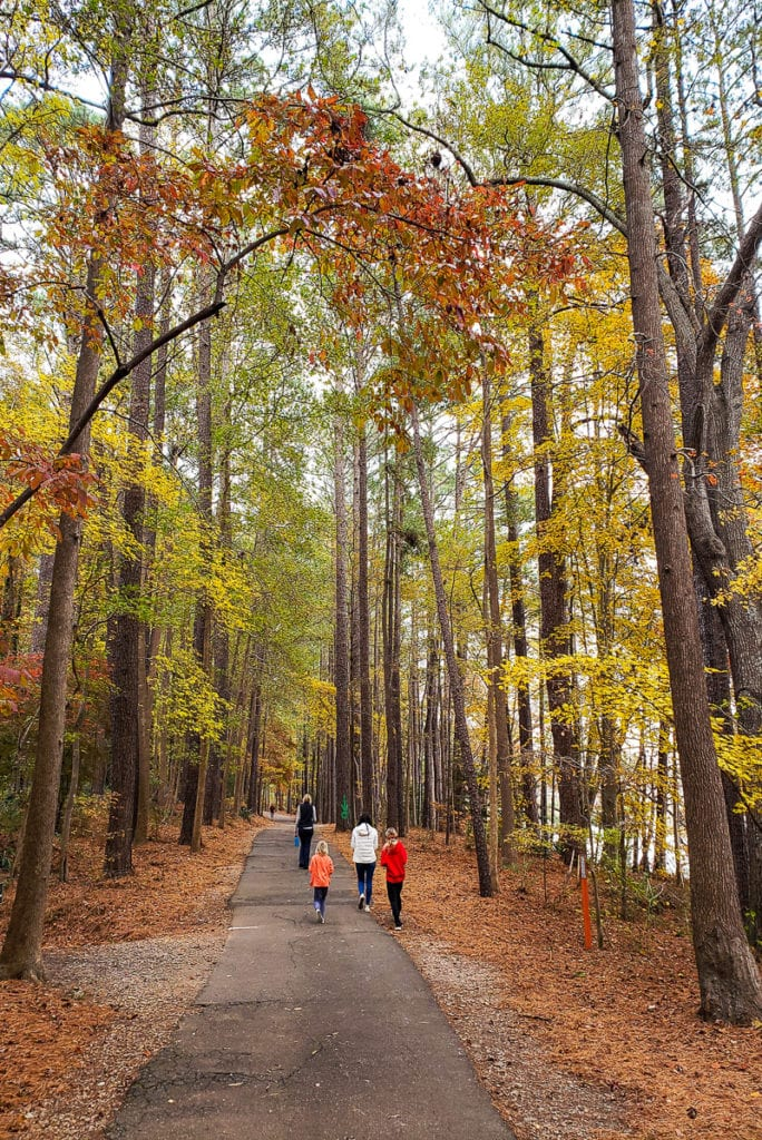 Lake Johnson nature trail in the fall, Raleigh