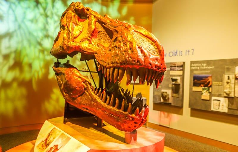 north carolina museum of natural sciences 14