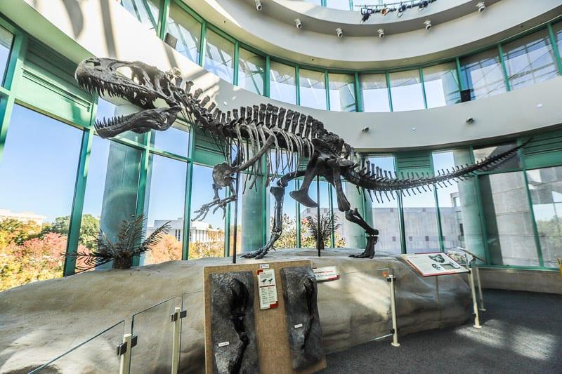 north carolina museum of natural sciences 21