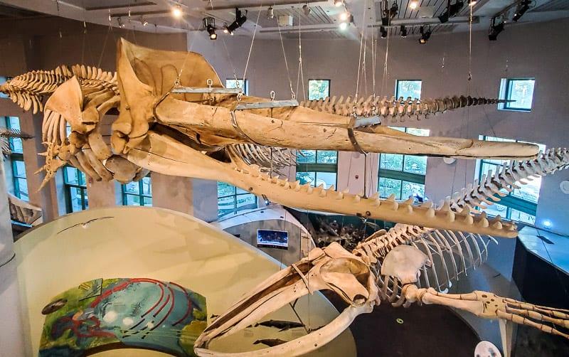 north carolina museum of natural sciences 3