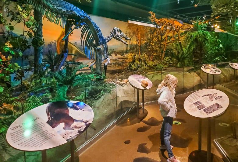 north carolina museum of natural sciences 31