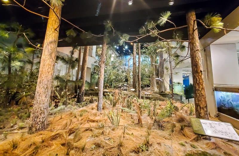 north carolina museum of natural sciences 43