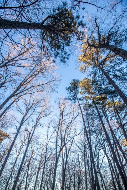 Hemlock Bluffs Nature Preserve, Cary, North Carolina